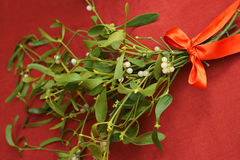 Mistletoe with red ribbon bow royalty free stock photography