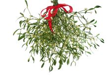 Mistletoe's bunch with  red ribbon Royalty Free Stock Image