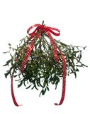 Mistletoe's bunch with  red ribbon Royalty Free Stock Photos