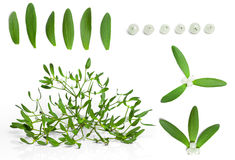 Mistletoe set Stock Image
