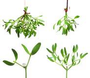 Mistletoe set. Green mistletoe with red ribbon set stock photo