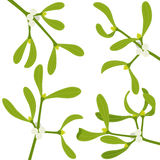 Mistletoe sprigs. For christmas decorations Stock Photos