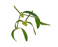 Mistletoe Sprigs Stock Photos