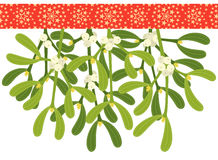 Mistletoe sprigs Stock Images