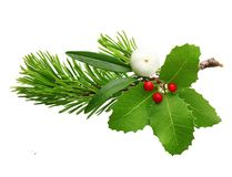 Mistletoe twig and fir tree branch. Mistletoe twig, holly berry and fir tree branch christmas decoration over white background.h Stock Images