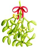 Mistletoe Watercolor vector illustration