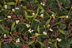Mistletoe and Winter Greenery Royalty Free Stock Photo