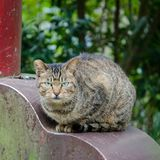 Mistrustful cat stares suspiciously straight ahead. With tail tucked, head lowered, in Taipei Taiwan Stock Image