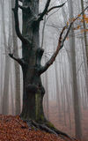 mistrzowski drzewo obraz royalty free