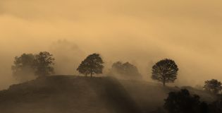 Mists at dawn. Forest landscape in fog at dawn Stock Photos