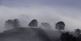 Mists at dawn. View of a hill with trees and fog Stock Images
