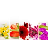 Mistura colorida da flor Fotos de Stock Royalty Free