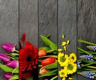 Mistura colorida da flor Foto de Stock