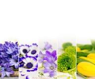 Mistura colorida da flor Imagens de Stock Royalty Free