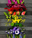 Mistura colorida da flor Foto de Stock Royalty Free