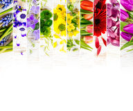 Mistura colorida da flor Fotografia de Stock Royalty Free