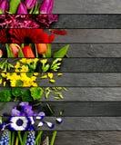 Mistura colorida da flor Imagens de Stock