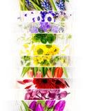Mistura colorida da flor Fotos de Stock