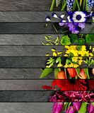 Mistura colorida da flor Imagem de Stock Royalty Free