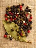 Mistura colorida das pimentas Foto de Stock