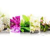 Mistura da flor da mola Foto de Stock Royalty Free