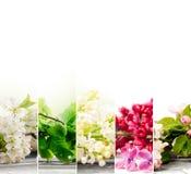 Mistura da flor da mola Fotos de Stock Royalty Free