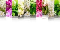 Mistura da flor da mola Imagens de Stock
