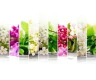 Mistura da flor da mola Imagem de Stock Royalty Free