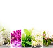 Mistura da flor da mola Fotos de Stock