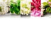 Mistura da flor da mola Fotografia de Stock Royalty Free