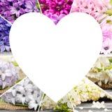 Mistura da flor da mola Imagens de Stock Royalty Free