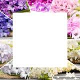 Mistura da flor da mola Foto de Stock