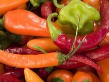 Mistura da paprika Imagem de Stock Royalty Free