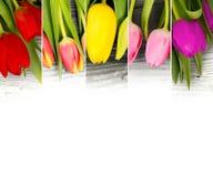 Mistura da tulipa imagens de stock royalty free