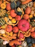 Mistura das abóboras de várias cores e variedades foto de stock royalty free