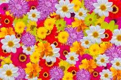 Mistura de cores brilhantes, fundo sem emenda imagens de stock
