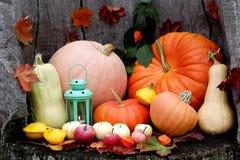 Mistura de Dia das Bruxas Autumn Pumpkin em um fundo de madeira imagens de stock royalty free