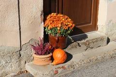Mistura de flores bonitas do terraço da queda Imagens de Stock