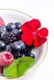 Mistura de frutas Fotografia de Stock