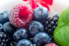 Mistura de frutas Imagem de Stock Royalty Free