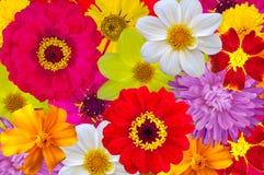Mistura de grandes flores brilhantes, fundo fotografia de stock royalty free