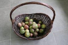 Mistura de Passionfruits maduro e verde na cesta de Brown Fotos de Stock Royalty Free
