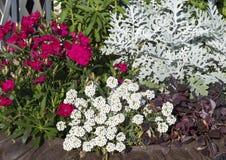 Mistura de plantas bonitas em um plantador fotografia de stock