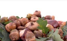 Mistura do outono Fotos de Stock