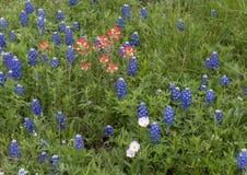 Mistura dos Bluebonnets, do pincel indiano e da prímula de nivelamento vistoso ao longo da fuga do Bluebonnet em Ennis, Texas imagens de stock