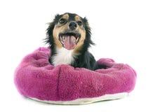 Misturado-Produza o cão imagens de stock