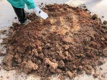 Misturar subtrai com terra no jardim do berçário da planta foto de stock royalty free