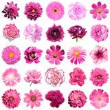 Misture a colagem das flores naturais e surreais 25 do rosa em 1 Fotos de Stock