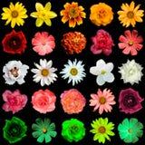 Misture a colagem de amarelo, vermelho, branco, aumentou, esverdeiam flores imagem de stock