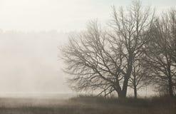 Mistv di mattina Fotografie Stock